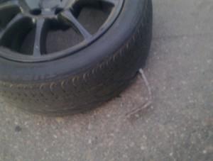 В Ульяновске у 25 автомобилей проткнули шины